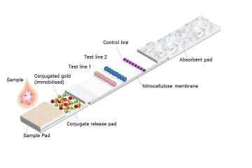 Lateral flow assay labels and conjugation